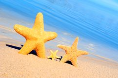 Starfish. On the sunny sand stock photography