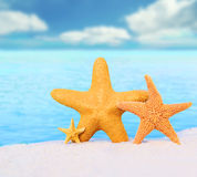 Starfish. On the sunny sand stock image