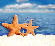 Starfish. On the sunny sand royalty free stock image