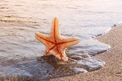 Starfish in a surf of Caribbean sea. Symbol of summer vacation a Stock Photography