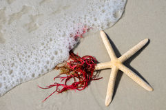 Starfish in the Surf Royalty Free Stock Image