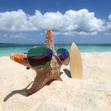 Starfish surfer on beach Stock Images
