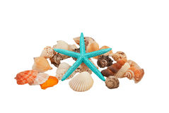 Starfish surrounded by shells Stock Image