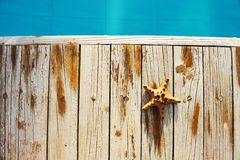 Starfish by a swimming pool Stock Image
