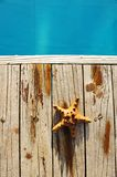 Starfish by a swimming pool Stock Photo