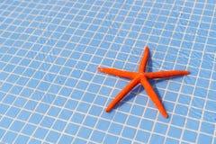 Starfish in swimming pool Stock Photo