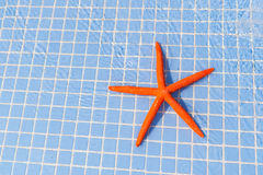 Starfish in swimming pool Royalty Free Stock Photo