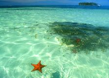 Starfish swimming in shallow turquoise waters of san blas archipelato stock image