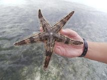 Starfish. Tanzania Zanzibar Beach wildlife Royalty Free Stock Images