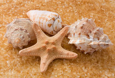 Starfish and three seashell. Seashells and starfish on golden background Royalty Free Stock Photography