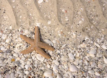 Starfish in Tidal Pool Stock Image