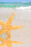 Starfish by Tidepool on Beach Royalty Free Stock Photo