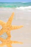 Starfish by Tidepool on Beach Royalty Free Stock Photo