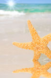 Starfish by Tidepool on Beach Stock Images