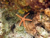 Starfish tief in das Korallenriff stockbild
