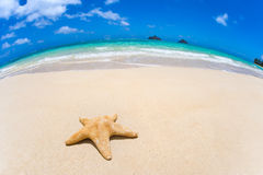 Starfish on tropical beach Royalty Free Stock Photos