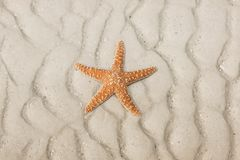 Starfish on a tropical beach Stock Photography