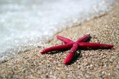 Starfish On A Tropical Beach. Starfish on summer sunny beach. Travel, vacation concepts. Selective focus, Shallow DOF Stock Photography