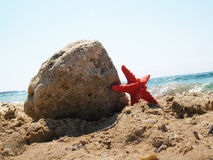 Starfish on tropical beach Royalty Free Stock Photo