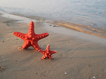 Starfish on tropical beach Stock Image