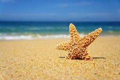 Starfish. On a tropical beach and blue summer sky Stock Image