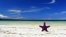 Starfish on tropical beach. Footage stock footage