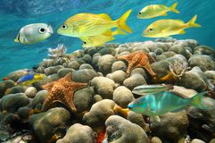 Starfish and tropical fish in a coral reef Stock Images
