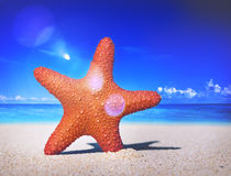 Starfish-tropische Strand-Sand-Sommer-Insel Shell Concept Stockbild