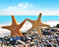 Starfish. Two starfish on the beach and sea royalty free stock photo