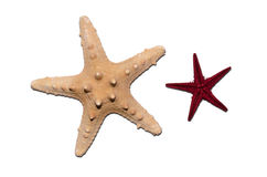 Starfish. Two starfish closeup isolated on white background Royalty Free Stock Photography