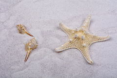 Starfish and two shells on a greay sand Royalty Free Stock Photos