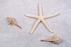 Starfish and two shells on a greay sand Royalty Free Stock Images