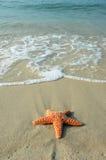 Starfish und der Ozean Lizenzfreie Stockfotos