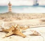 Starfish und eine Muschel Stockfoto