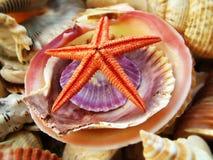 Starfish und farbige Shells Stockfoto