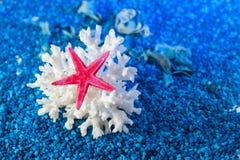 Starfish und Muschel auf blauem Sand Stockfotos