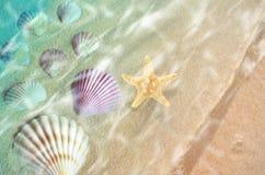 Starfish und Muschel auf dem Sommer setzen im Meerwasser auf den Strand Stockfoto