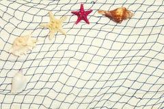 Starfish und Muschel auf einem hellen hölzernen Hintergrund Stockfotos