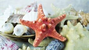 Starfish und Muscheln Stockfotos