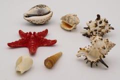 Starfish und Muscheln auf der wei?en Tabelle stockfotografie