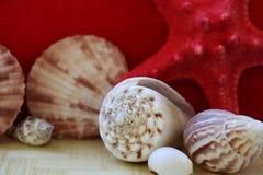 Starfish und Muschelnahaufnahme stockbild