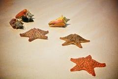 Starfish und Oberteil auf dem Sand stockfotos