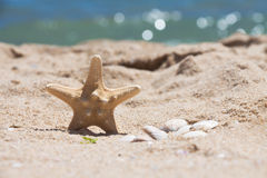 Starfish und Oberteile auf dem Strand. Linke Position. Lizenzfreie Stockbilder