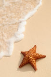 Starfish- und Ozeanwelle stockfotografie