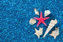 Starfish und schöne Nahaufnahme der Muscheln auf blauem Hintergrund Stockfoto