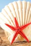 Starfish und Seashell Lizenzfreie Stockbilder