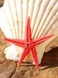 Starfish und Seashell Stockbilder