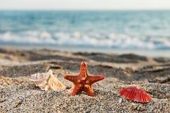 Starfish und Seashell auf Meersandstrand Lizenzfreies Stockfoto