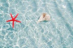 Starfish und Seashell clea im weißen Sand setzen auf den Strand Stockfotos