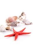 Starfish und Seashells Lizenzfreie Stockfotos